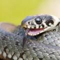 Змеи — страх без причины?