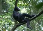 Бонобо — нужна ваша помощь