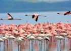 Фламинго — птица, которая ест вниз головой