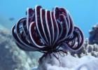 Морские лилии — многорукие существа