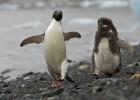 Пингвины в беде