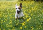 Проблемы поведения собак
