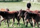 Своевременная помощь брошенным пони